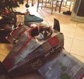 My kitten got his own plane for Christmas…