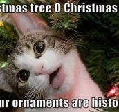 Cats at Christmas time, it's a tradition…