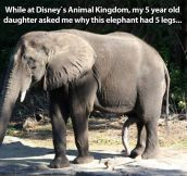 A well gifted elephant…