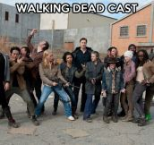 The cast of The Walking Dead…