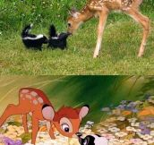 Bambi in real life…