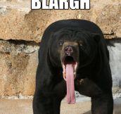 Malayan sun bear…