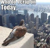 What birds think everyday…