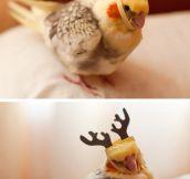 Birds ready for Christmas…