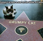 This cat has achieved more than I ever will…