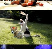Cat vs. balloon…