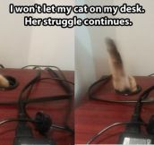 Persevering cat…