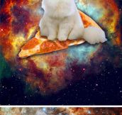 Pictures of majestic cats in space…