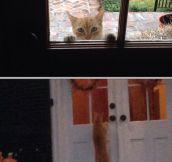Levitating cat…