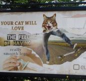 Your cat will love…