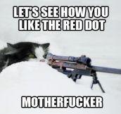 Sniper cat…