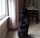 Just watching birds…