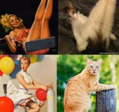 Cats that look like pin-up girls…