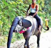 Strange looking elephant…