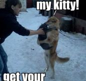 Get your own kitty…