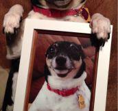 Dog's Christmas gift…