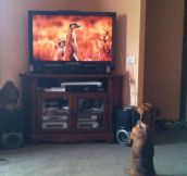 This dog wants to be a meerkat…