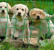 Three degrees of curiosity…