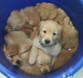 A Bucket of cuteness…