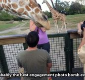 Giraffes, always ruining everything…