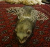 3D wings…