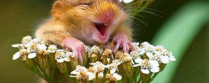 Really enjoying the flowers…