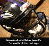 Tiny football helmet…