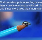 Poisonous frog…