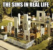 Real life Sims…