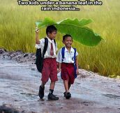 Two friends and a banana leaf…