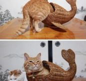 Fish kitty…