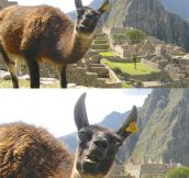 Meanwhile in Machu Picchu…