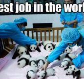 The cutest job you could ever have…