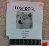 Please find my dog…