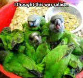 That's a tasty salad… Wait…