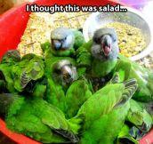 That's a tasty salad… Wait…