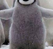Free penguin hug…