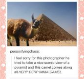 In the way camel…