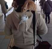 The rabbit whisperer…