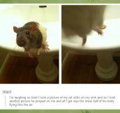 Rat attack…