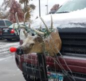 Rudolph on the road…