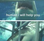 Misunderstood helping shark…