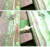 Parkour snail…