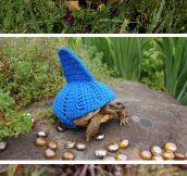 Magnificent tortoise cozies…