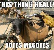 Totes Magotes…