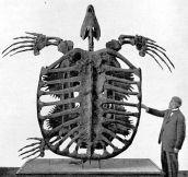 Prehistoric skeleton…