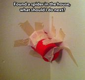 How to react when you see a spider…