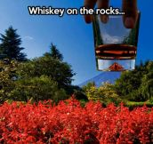 On the rocks…