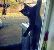Cat surprise…