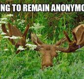 Moose, where?